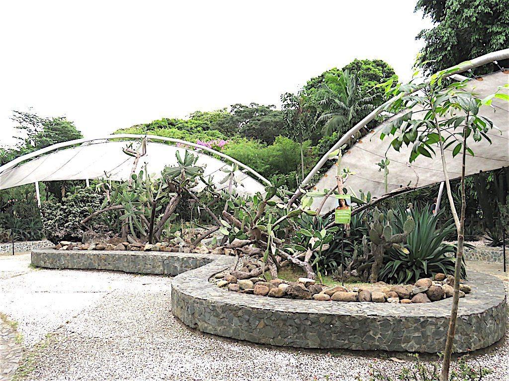 Desert Garden at Jardín Botánico