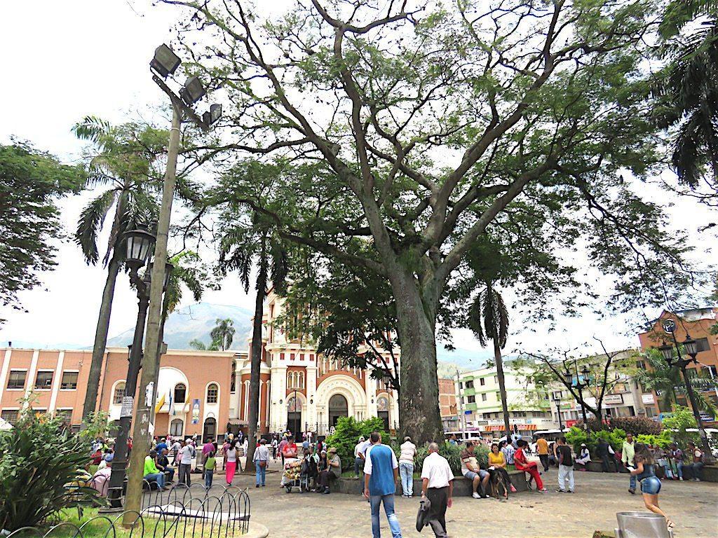 Parque Bello with Iglesia Nuestra Señora del Rosario behind the big tree