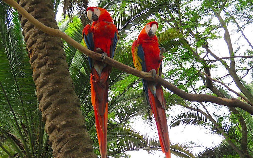 Parque Zoológico Santa Fe: A Guide to the Medellín Zoo