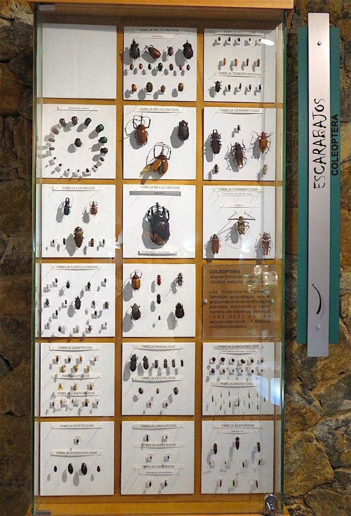 Beetles on display in the museum