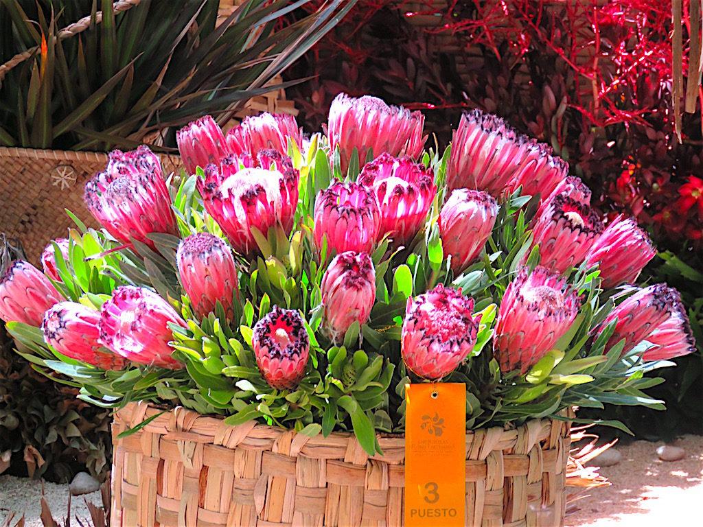 Flowers on display